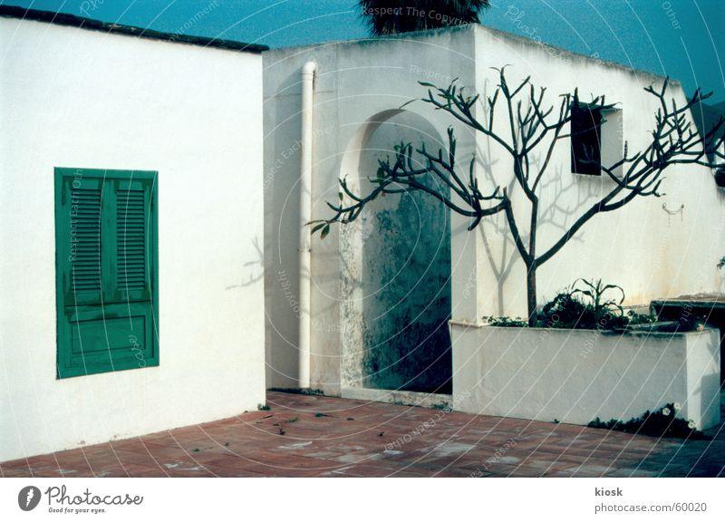 jemand zu hause? Haus Fensterladen Baum weiß Mauer Lanzarote Tür