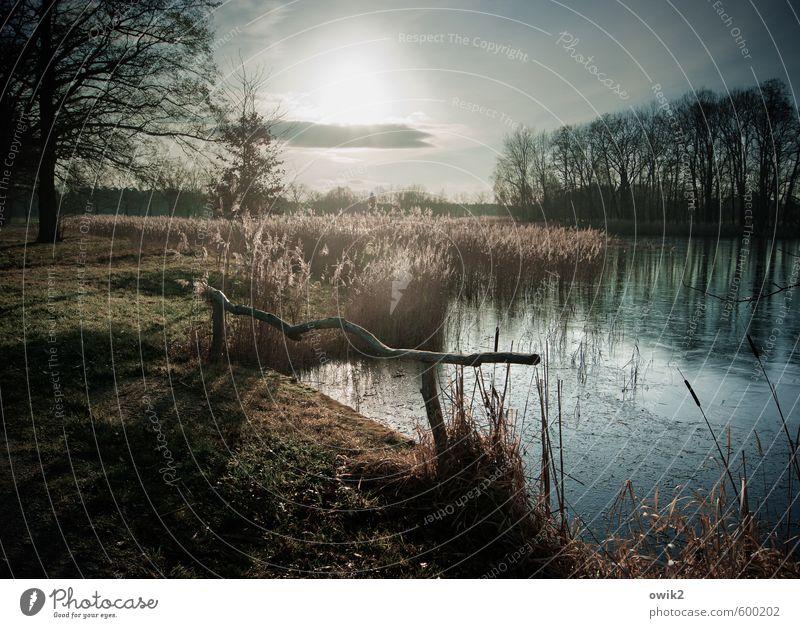 Lichtschranke Umwelt Natur Landschaft Pflanze Himmel Wolken Horizont Klima Wetter Schönes Wetter Baum Gras Sträucher Zweige u. Äste Seeufer leuchten glänzend