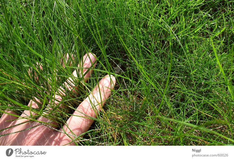 Hand im Grasraum Wiese grün Finger Sommer Weltmeisterschaft Rasen Natur niggl