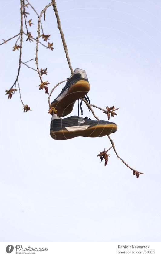Baumschuhe Turnschuh Schuhe hängen Luft aufgehängt Ast shoe shoes tree Himmel