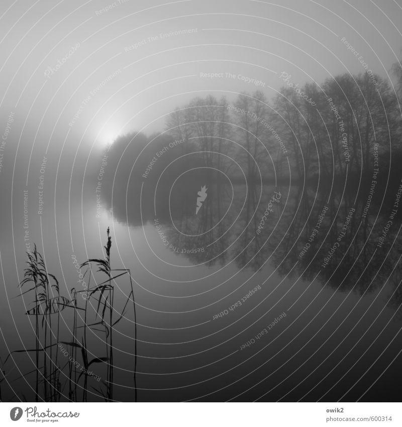 Começar de novo Umwelt Natur Landschaft Pflanze Horizont Sonne Winter Klima Wetter Schönes Wetter Nebel Baum Sträucher karg Zweige u. Äste Riedgras Seeufer