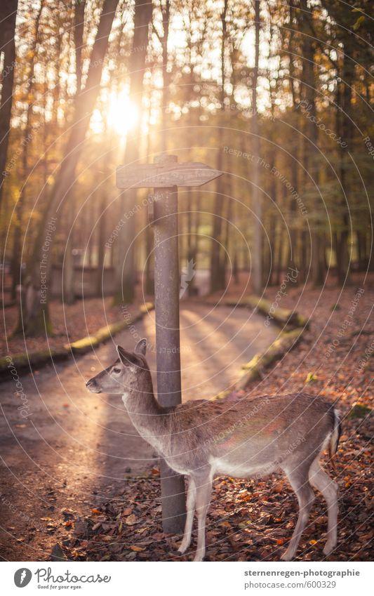 ich glaub' ich steh' im Wald! Natur Baum Tier Umwelt Herbst Wege & Pfade Stimmung Wildtier wandern Schilder & Markierungen Lebensfreude Jagd Zoo Wegekreuz Reh