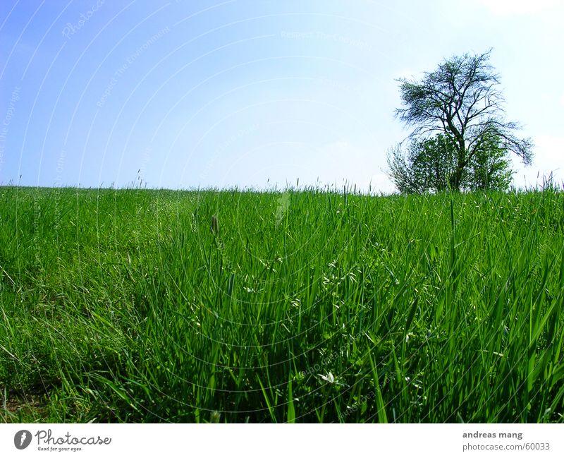 Lone Tree 01 Himmel Baum Einsamkeit Wiese Gras Feld