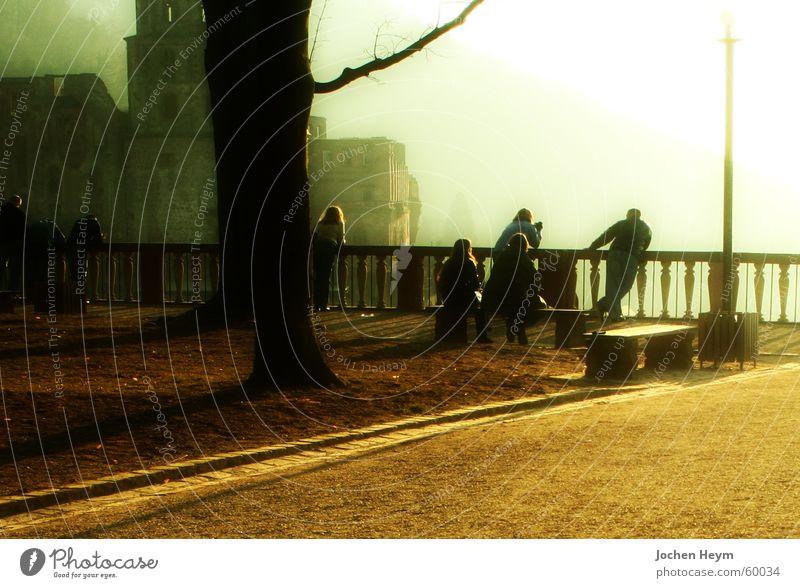 Schloss Heidelberg Mauer Nebel Aussicht Burg oder Schloss Tourist Sightseeing Gelände