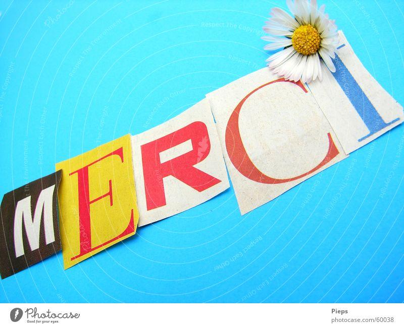 Für was auch immer Farbfoto Innenaufnahme Freude Blume Papier Schriftzeichen dankbar Kommunizieren danke schön danken Gänseblümchen Buchstaben Dankbarkeit