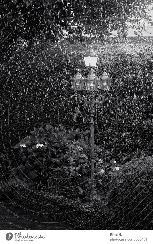 Regen schwarz-weiß Pflanze Sommer Baum Blume dunkel Frühling Garten Wetter Regen Klima nass Straßenbeleuchtung Klimawandel schlechtes Wetter Hecke Hortensie