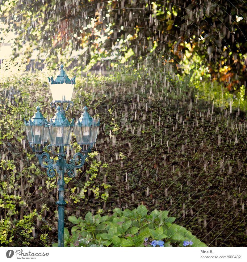 Frühling 2013 Klima schlechtes Wetter Regen Pflanze Baum Garten kalt nass Straßenbeleuchtung Farbfoto Außenaufnahme Menschenleer