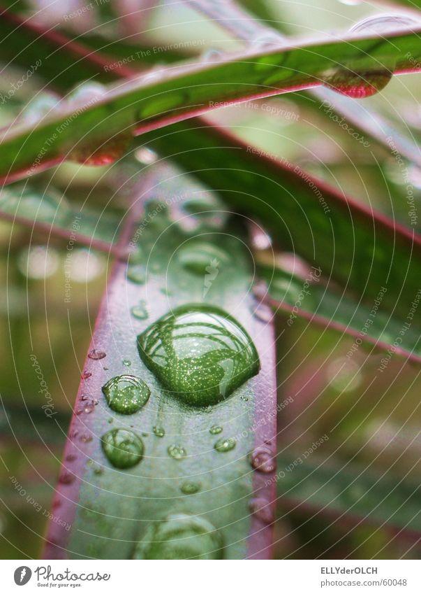 Regenwald im Wohnzimmer Palme Pflanze grün Streifen Wellness harmonisch Makroaufnahme Nahaufnahme Wassertropfen Schnur Tränen tears rain Urwald