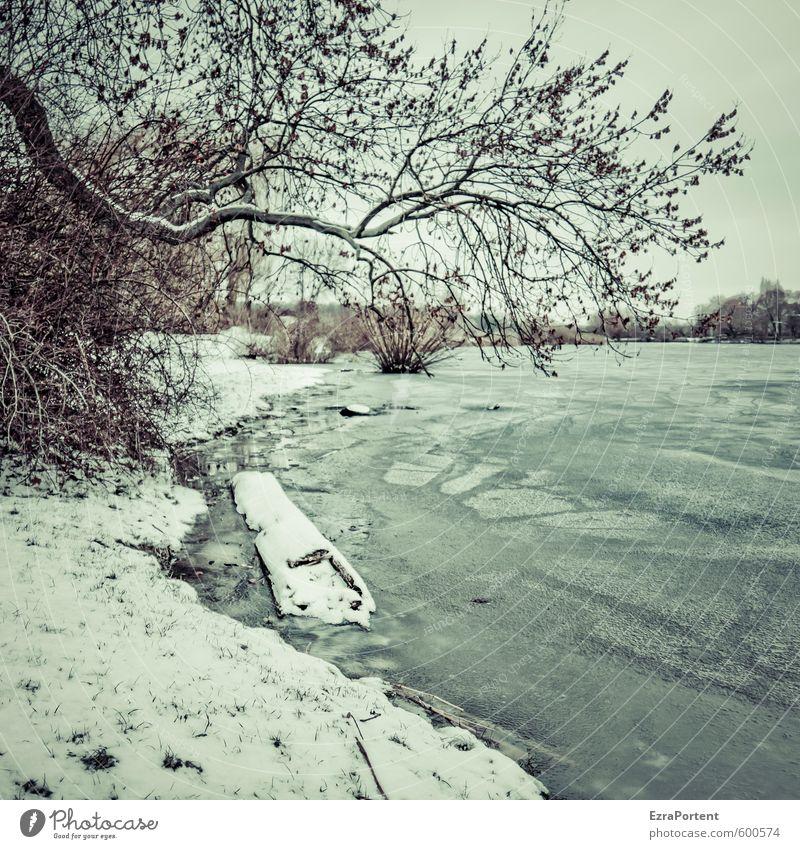 der Hr.Winter Umwelt Natur Landschaft Pflanze Erde Luft Wasser Himmel Klima Wetter Eis Frost Schnee Baum Park Wiese Seeufer Flussufer blau braun grau gefroren