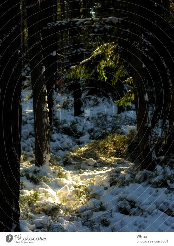 Märchenwald Wald