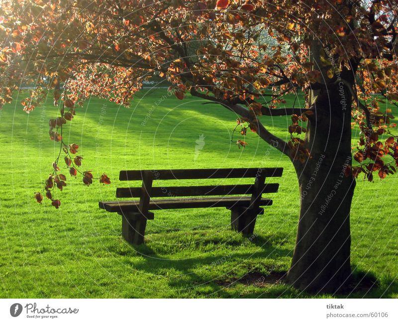 Parkbank Holzbank Frühling Gras grün Baum Blatt ruhig Erholung Gegenlicht Bank Abend