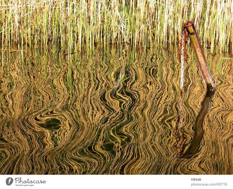 Spiegelung Schilfrohr Reflexion & Spiegelung See Wellen Ankerplatz Eisen Muster kräuseln Wasser Küste Steg Rost