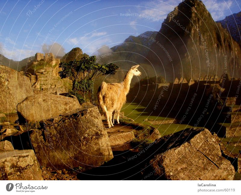 im Reich der Inka Sonnenaufgang Peru Nebel Aussicht Machu Pichu Sonnenstrahlen Berge u. Gebirge Lama Natur Stein blau Himmel rocks sunrise Schatten