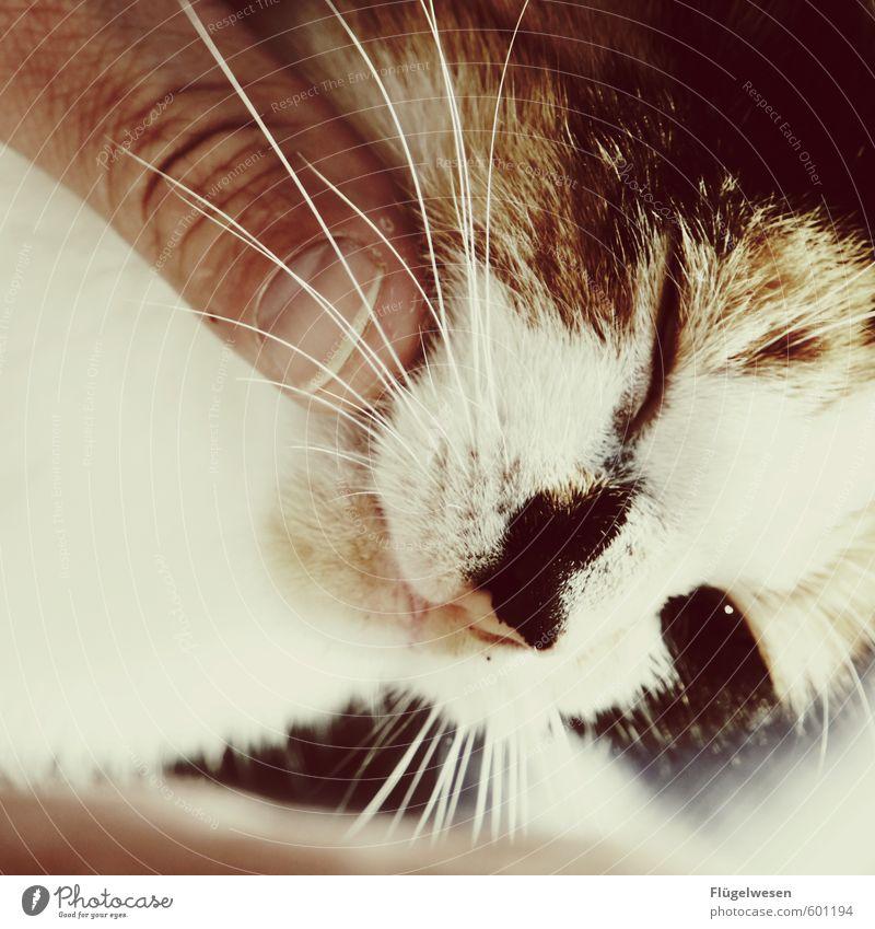 Katzenfroh Erholung Tier träumen Zufriedenheit Finger Wellness Haustier Fingernagel Kuscheln Schnurrhaar Katzenbaby Streicheln Katzenauge Schnurren Katzenkopf