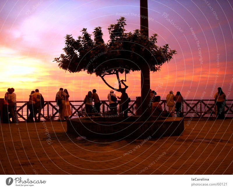 lovers in Lima Peru Sonnenuntergang Licht Stimmung Baum Romantik Paar Mensch Himmel paarweise