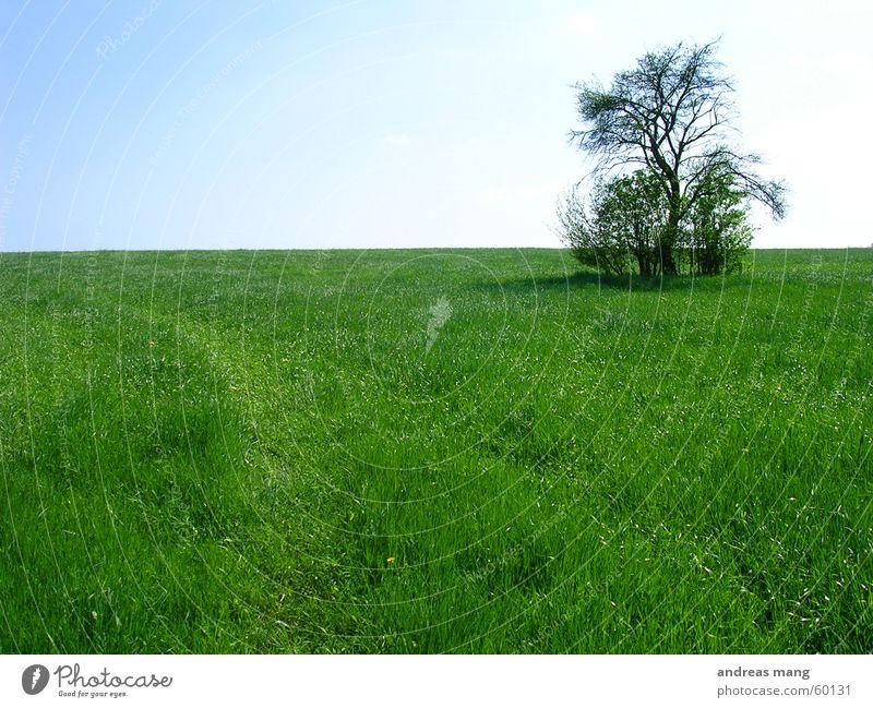 Lone Tree 02 Himmel Baum Einsamkeit Wiese Gras Feld