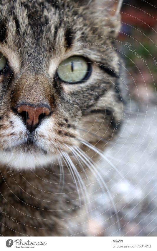 Durchblick Tier Haustier Katze Tiergesicht 1 beobachten Blick Willensstärke Hochmut Stolz eitel Auge Farbfoto Außenaufnahme Detailaufnahme Tag Tierporträt