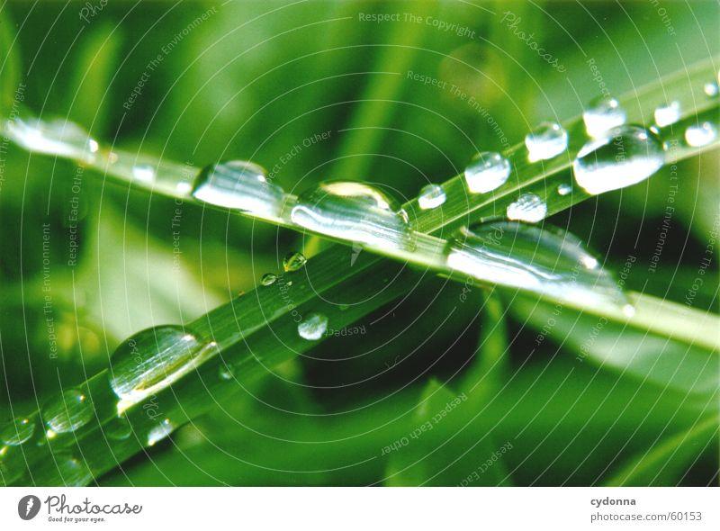 Wassertropfen I Gras Halm grün Seil Natur Detailaufnahme Makroaufnahme