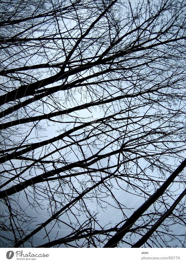 lost 5 Baum Winter Wald dunkel Denken Nebel Spaziergang atmen schlechtes Wetter