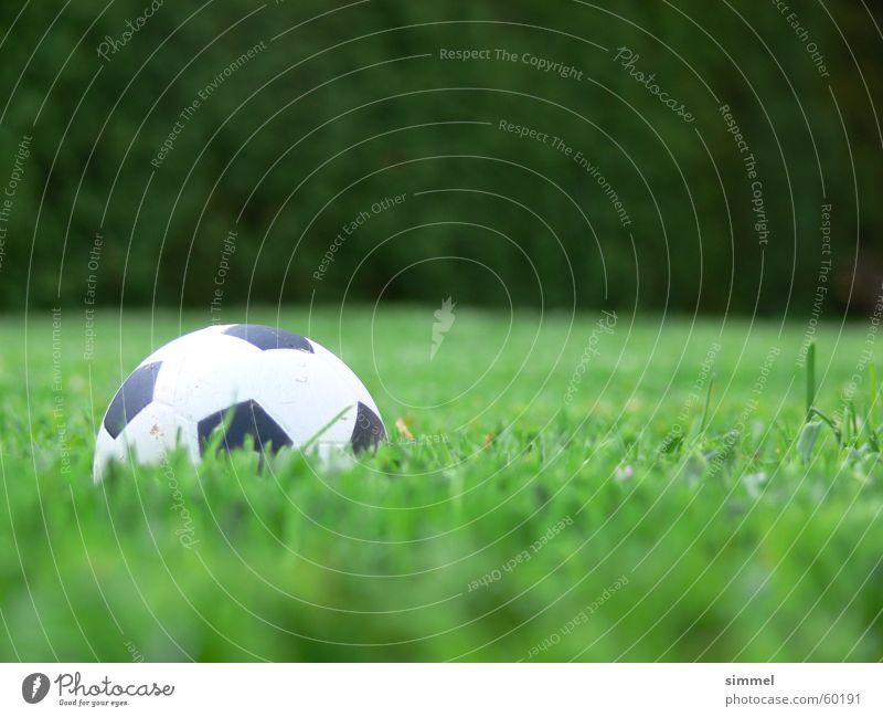 falscher Fußball Schaumstoff Gras grün Sommer Ballsport Sport fünfeckig Natur Schwache Tiefenschärfe Froschperspektive 1 Farbfoto Menschenleer Kugel