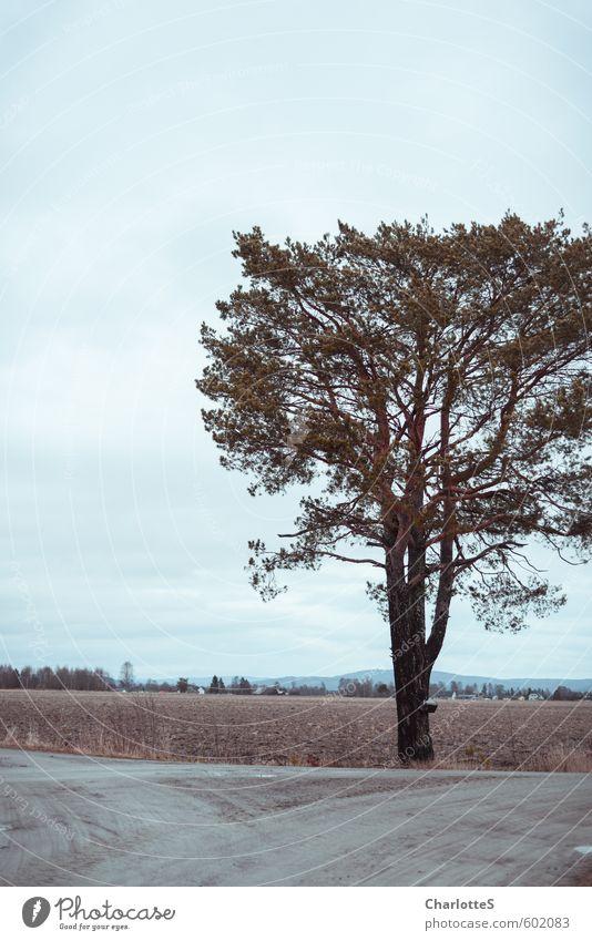 die Kiefer Natur Erde Wolken Herbst Winter Wetter schlechtes Wetter Baum Feld Hügel Stein Holz wandern warten nass natürlich blau Vorsicht Gelassenheit ruhig
