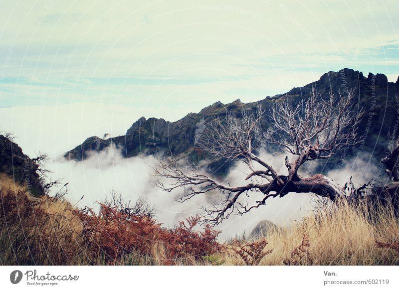 am Abgrund stehen Ferien & Urlaub & Reisen wandern Natur Pflanze Himmel Wolken Herbst Baum Gras Sträucher Felsen Berge u. Gebirge Madeira alt Krankheit Farbfoto