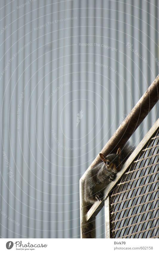In der Klemme Tier schwarz Wand Gebäude Mauer Architektur grau braun Angst Fassade sitzen Wildtier beobachten niedlich Streifen verstecken