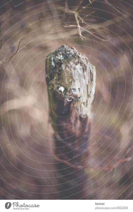 Alt und weise und ein bißchen morsch Sträucher Zweige u. Äste Pfosten Holzpfahl Zaunpfahl alt Gefühle Einsamkeit verfallen Abnutzung Verfall vergessen Farbfoto