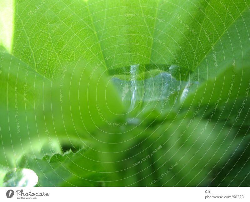 Wasserbecken Wasser grün Pflanze Blatt Frühling See Regen Wassertropfen nah Teich Becken Blattadern Einblick Wasserbecken geädert