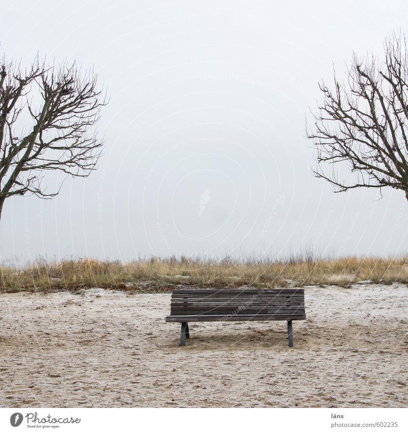 Sandbank ruhig Ferien & Urlaub & Reisen Tourismus Strand Meer Winter Winterurlaub Erholungsgebiet Himmel Wolken Baum Ostsee Stranddüne braun Beginn
