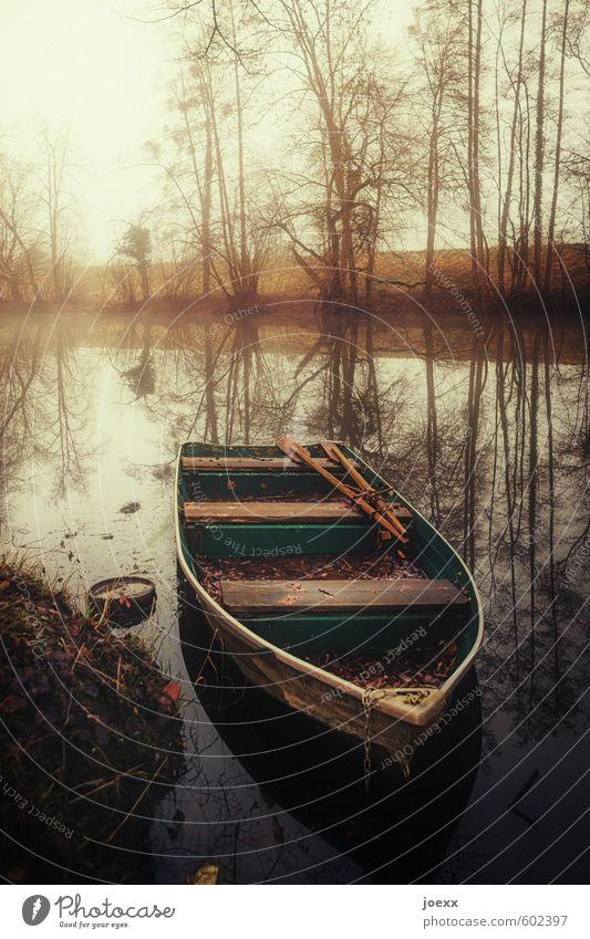 Ruhiger Fluß Natur alt grün Wasser Baum ruhig gelb Herbst braun Wetter Nebel Idylle Romantik Flussufer Identität Ruderboot