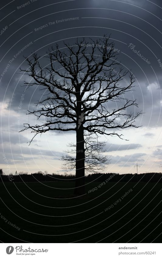 Holzblitz Baum Wolken Einsamkeit Wald Traurigkeit groß dünn Unwetter bizarr Abenddämmerung