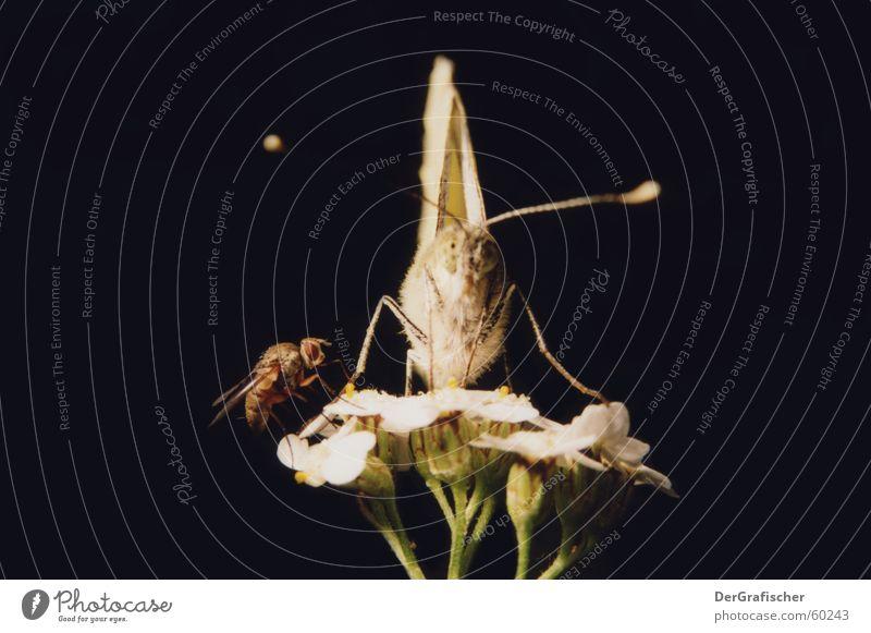 Starsky & Hutch schön ruhig Auge Blüte Freundschaft sitzen Tierpaar warten Vertrauen Insekt Schmetterling bewegungslos Partner Sportveranstaltung