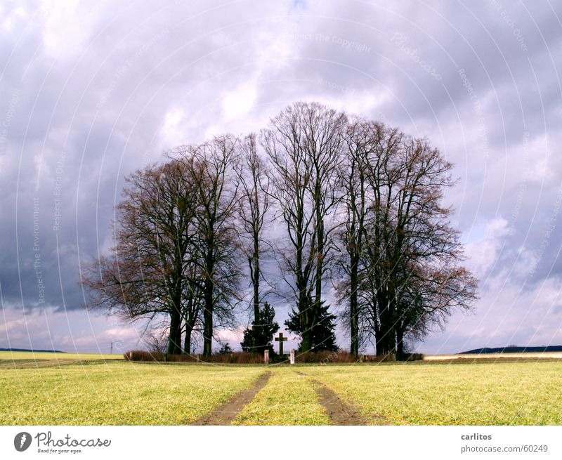 der Fluch der Serie ... Himmel Baum schwarz Wolken dunkel Herbst Rücken Hoffnung Trauer Denkmal Gewitter feucht Erinnerung Ewigkeit Tränen Grab