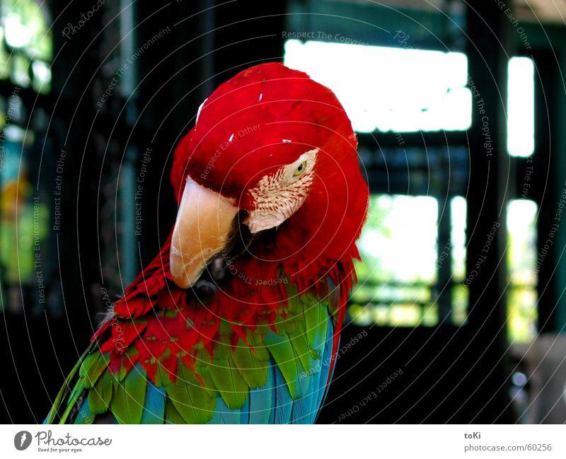 RGB grün blau rot Vogel Asien Reinigen China Schnabel Tempel Tier Papageienvogel Ara Hangzhou