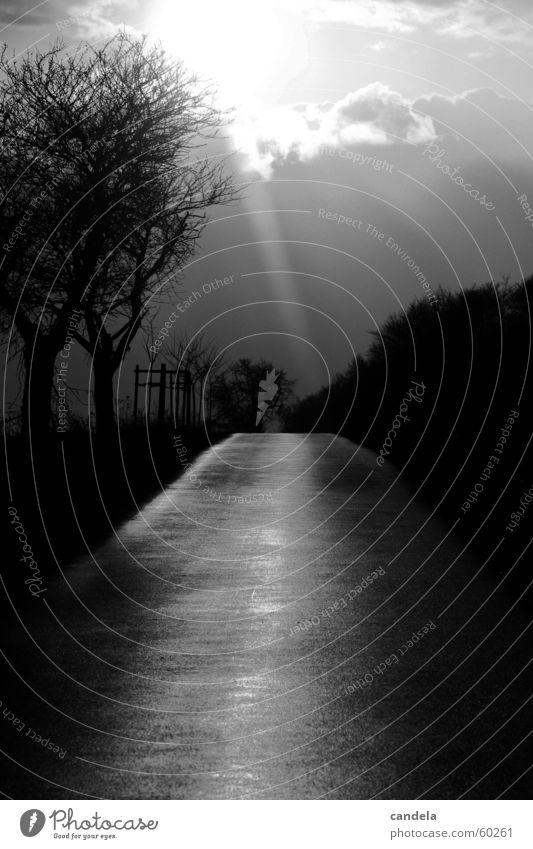 komm ins Licht... Natur weiß Baum Sonne Wolken schwarz Straße dunkel Wege & Pfade