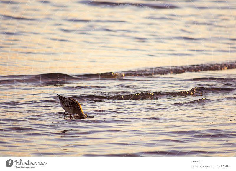 Untergrundforschung Tier Wasser Herbst Wellen Küste Wildtier Vogel 1 beobachten Denken Essen Fressen Blick lernen tauchen Neugier Tapferkeit Willensstärke Mut