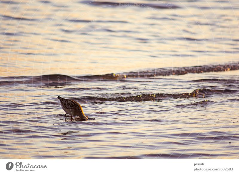 Untergrundforschung Wasser Tier Herbst Küste Denken Essen Vogel Wellen Wildtier beobachten lernen Hoffnung Neugier Suche tauchen Appetit & Hunger