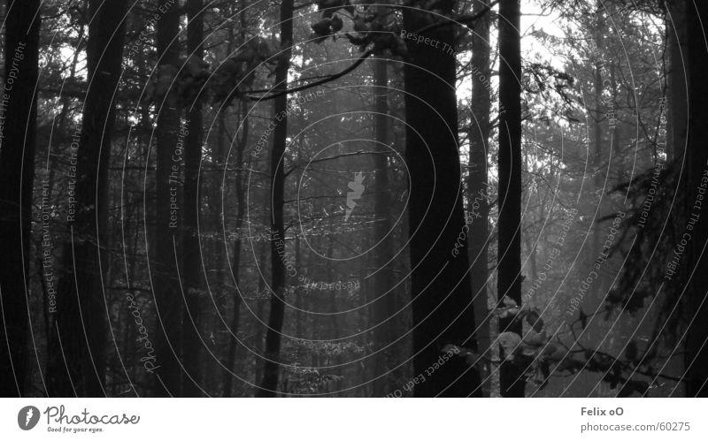 Spaziergang Nr.1 Wald Nebel Pfälzerwald