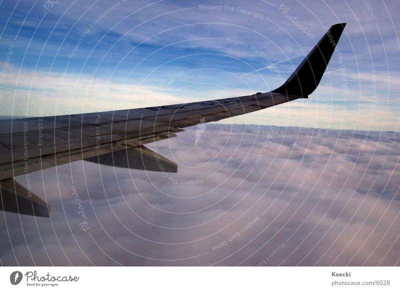In the Fliegzeug Wolken Flugzeug Luftverkehr Tragfläche Lust Blauer Himmel