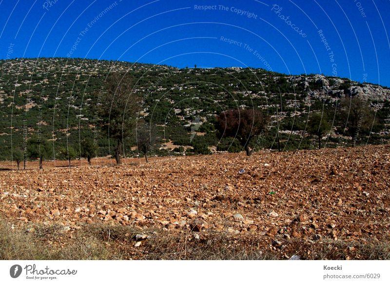 Türkische Einöde Himmel Baum blau Stein Feld Türkei steinig Türken