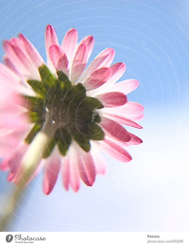 Gänseblümchen Himmel Natur weiß grün schön rot Pflanze Sommer Blume Wolken gelb Wiese Gras Frühling klein Garten