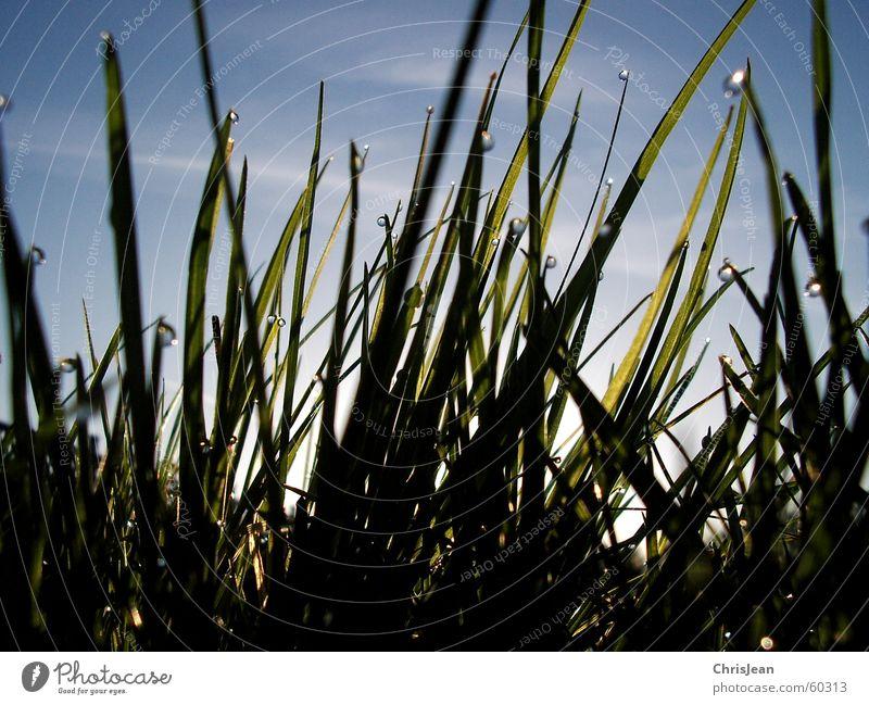 Titellos Himmel Natur blau grün Sommer Strand Erholung Wiese kalt Leben Wärme Gras Frühling hell nass Wassertropfen