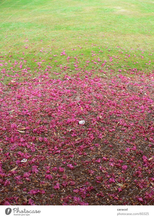 Bluetenzauber Blume grün Blüte rosa Rasen