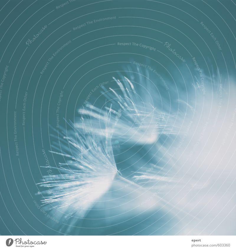 Kuschelgruppe | unstetig Natur schön Pflanze Blume Leben Freiheit frei ästhetisch Beginn einfach Vergänglichkeit Wandel & Veränderung weich Schutz rein