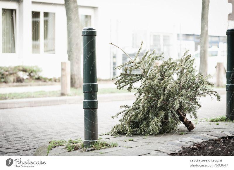vorbei Stadt grün weiß Baum Einsamkeit Winter Straße Gebäude Tod grau hell trist einfach Vergänglichkeit Vergangenheit Glaube