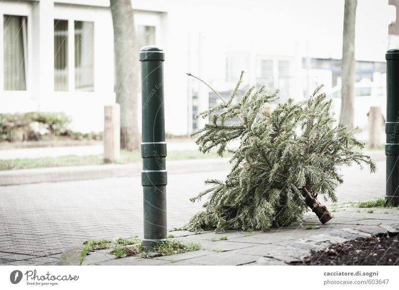 vorbei Winter Baum Weihnachtsbaum Gebäude Straße Pfosten einfach hell trist grau grün weiß Enttäuschung Einsamkeit Verzweiflung verschwenden Ende