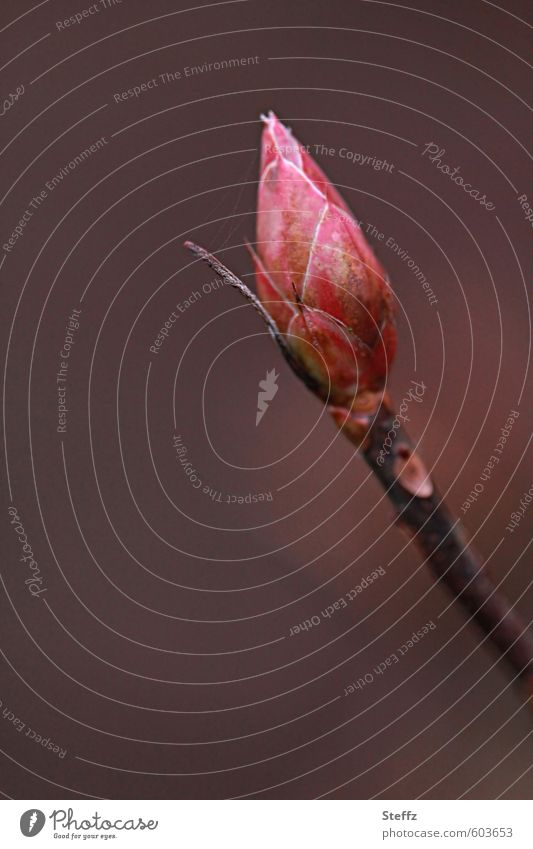 Neuanfang im Frühling Blattknospe Frühlingserwachen heimische Pflanzen Vorfreude Frühlingstag Frühblüher Wildpflanze erwartungsvoll Erwartung rotbraun neu