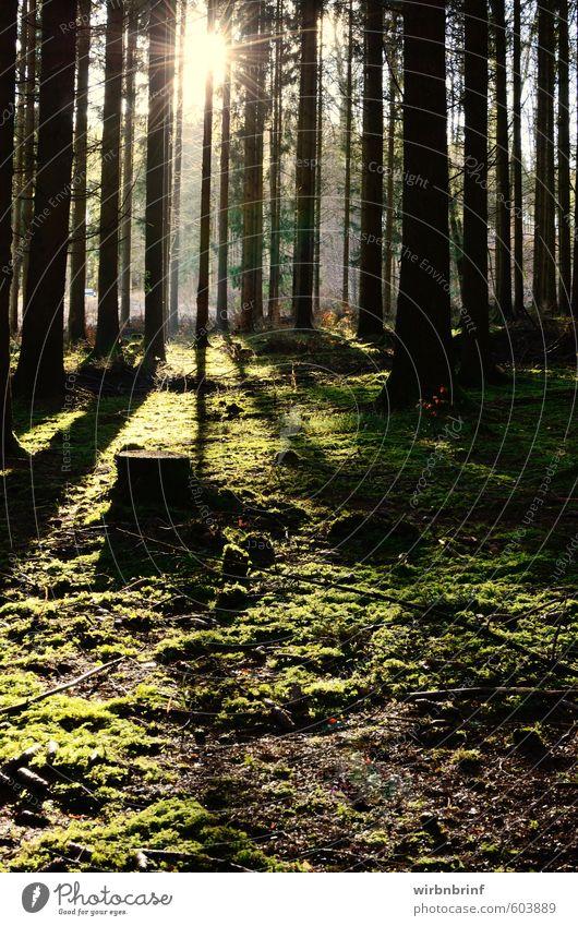 Licht und Schatten....... Umwelt Natur Sonne Winter Schönes Wetter Pflanze Baum Gras Moos Grünpflanze Wald Menschenleer Holz Erholung dunkel nachhaltig grün