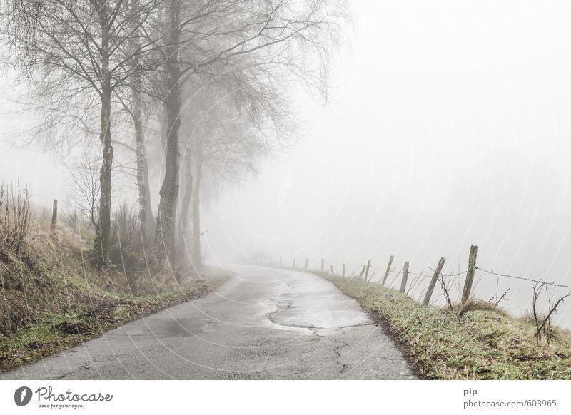 Weg weg Natur Landschaft Herbst Winter schlechtes Wetter Nebel Baum Birke Straße Wege & Pfade Landstraße grau trüb feucht Asphalt Kurve nass Traurigkeit